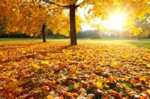 McHenry County Fall Festivals