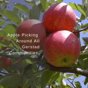 Apple Picking Around All Gerstad Communities