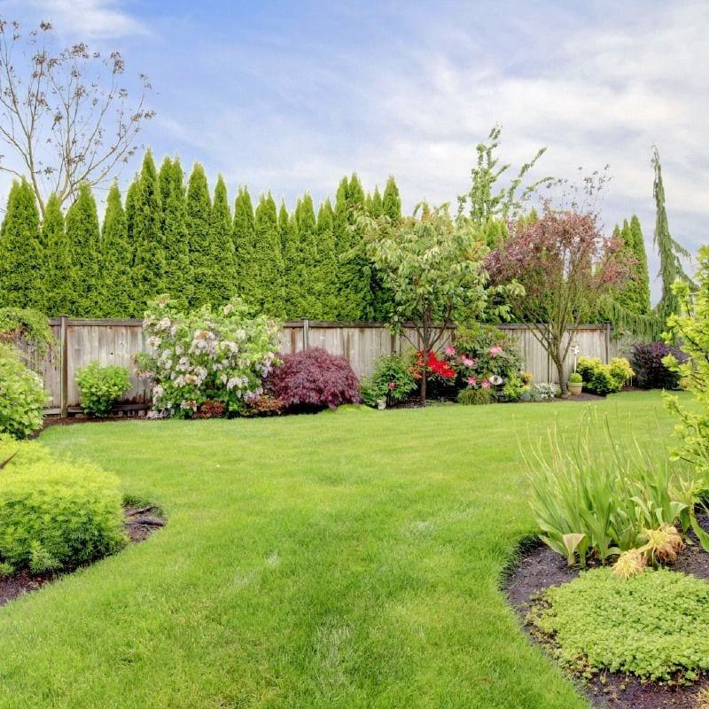 Creating a Dream Backyard